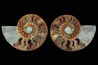 "4.7"" Cut & Polished Ammonite Pair - Crystal Lined Chambers For Sale, #78587"