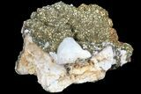 "3.8"" Pyrite On Calcite - El Hammam Mine, Morocco - #80725-2"
