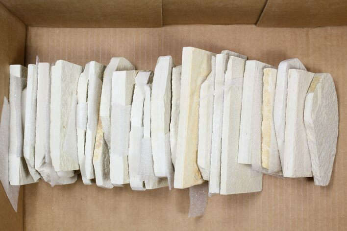 Wholesale Lot: Green River Fossil Fish - 25 Pieces
