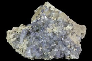 "Buy 2.3"" Purple/Gray Fluorite Cluster - Marblehead Quarry Ohio - #81187"