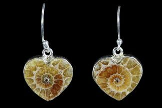 Fossil Ammonite Earrings - Sterling Silver For Sale, #81626