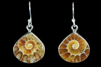 Fossil Ammonite Earrings - Sterling Silver For Sale, #81632
