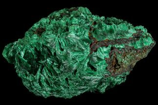 Malachite  - Fossils For Sale - #81774