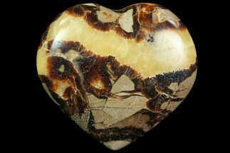 Septarian - Fossils For Sale - #82005