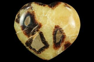 Septarian - Fossils For Sale - #82014