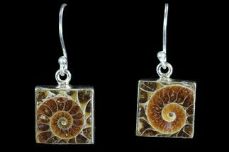 Fossil Ammonite Earrings - Sterling Silver For Sale, #82253