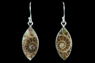Fossil Ammonite Earrings - Sterling Silver For Sale, #82259