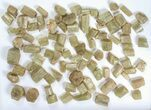Wholesale Flot:  1440g Apatite Crystals From Morocco - 150+ Pieces - #82342-1