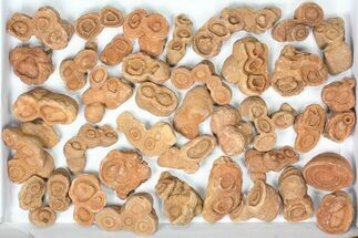 Wholesale: Sandstone Concretions (Pseudo-Stromatolites) - 38 Pieces For Sale, #82760