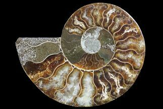 "3.2"" Agatized Ammonite Fossil (Half) - Madagascar For Sale, #83819"