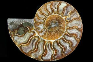 "3.8"" Agatized Ammonite Fossil (Half) - Madagascar For Sale, #83786"