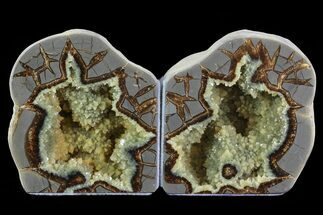 "Buy 4.6"" Polished Septarian Bookends - Utah - #80521"