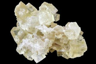 "1.3"" Lustrous Yellow Cubic Fluorite Crystal Cluster - Morocco  For Sale, #84290"