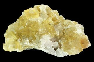 "2.7"" Lustrous Yellow Cubic Fluorite Crystal Cluster - Morocco  For Sale, #84302"