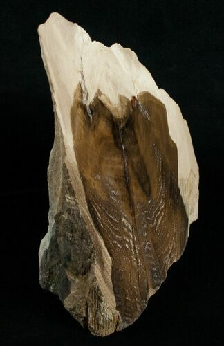 "6 1/2"" Tall Free-Standing Petrified Wood Specimen"