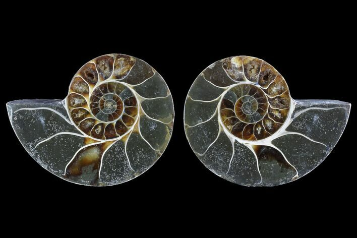 "3.5"" Cut & Polished Ammonite (Anapuzosia?) Pair - Madagascar"