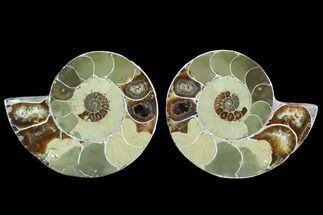 "3.5"" Cut & Polished Ammonite (Anapuzosia?) Pair - Madagascar For Sale, #88025"
