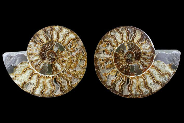 "6.45"" Cut & Polished Ammonite Fossil - Agatized"