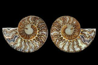 "Buy 4.25"" Cut & Polished Ammonite Fossil - Crystal Chambers - #88207"