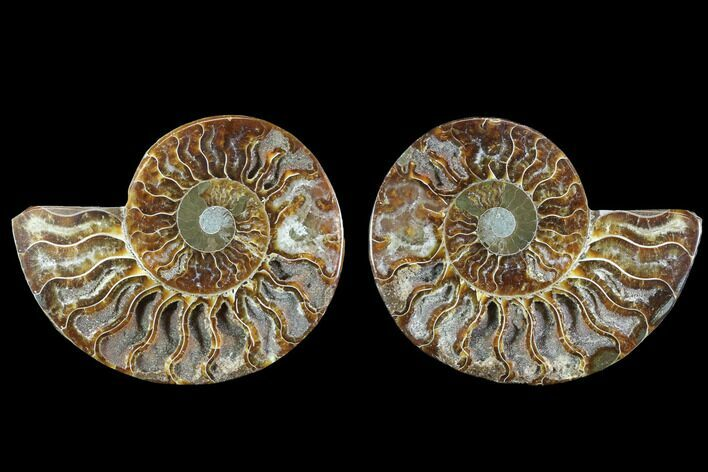 "4.2"" Cut & Polished Ammonite Fossil - Crystal Chambers"
