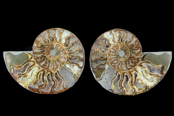 "4.85"" Cut & Polished Ammonite Fossil - Crystal Chambers"
