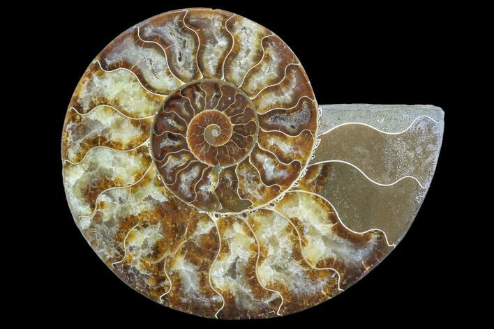 "6.25"" Agatized Ammonite Fossil (Half) - Madagascar"