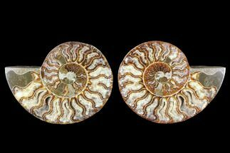 "Buy 5.55"" Cut & Polished Ammonite Fossil - Agatized - #88441"