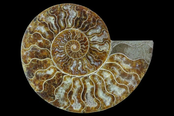 "6.15"" Agatized Ammonite Fossil (Half) - Madagascar"