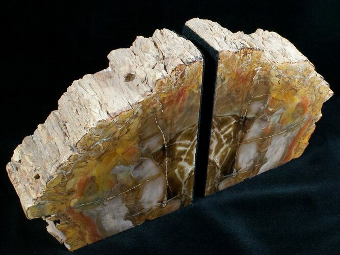 Small Petrified Wood Bookends - Madagascar