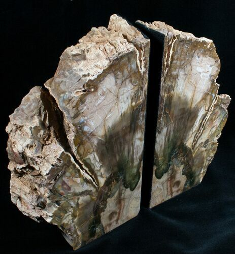 "Petrified Wood Bookends - 7.5"" Tall"