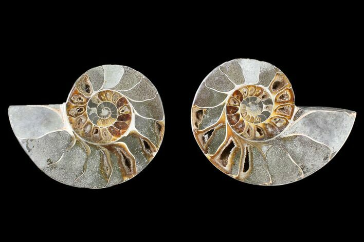 "3.8"" Cut & Polished Ammonite (Anapuzosia?) Pair - Madagascar"