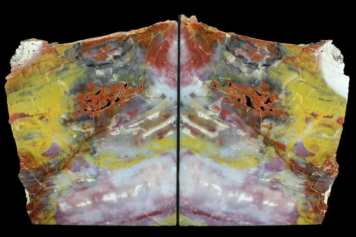 "10.6"" Tall, Arizona Petrified Wood Bookends - Red, Purple & Yellow"