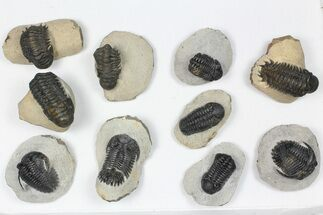 Various - Fossils For Sale - #84732