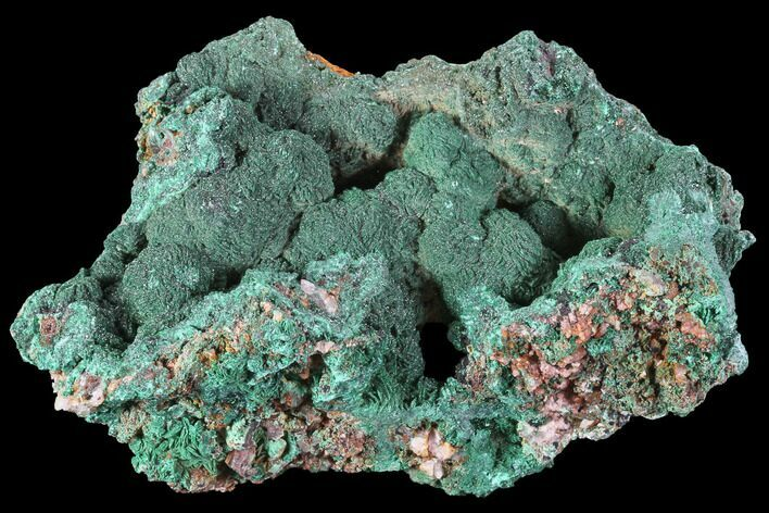 "4.2"" Malachite Crystals on Matrix - Morocco"