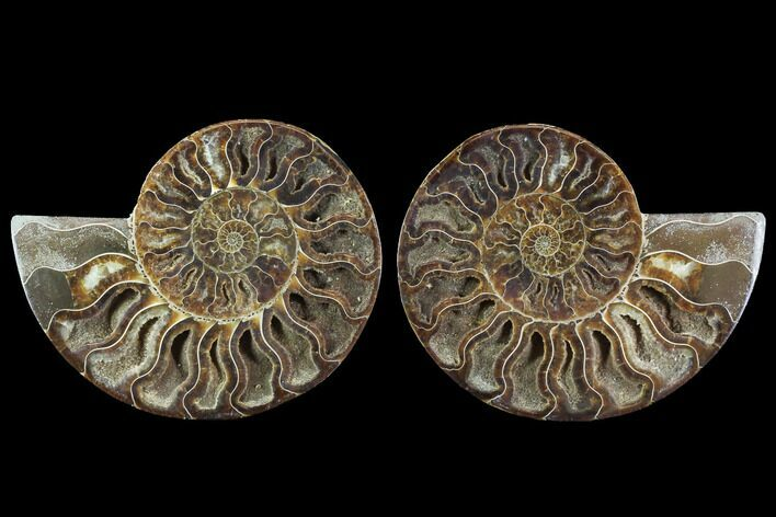 "5.7"" Cut & Polished Ammonite Fossil - Crystal Chambers"