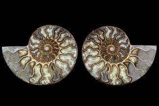 "5.85"" Cut & Polished Ammonite Fossil - Agatized For Sale, #91154"
