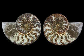 "5.4"" Cut & Polished Ammonite Fossil - Agatized For Sale, #91163"