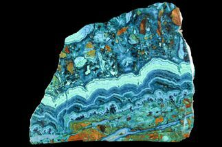 Chrysocolla & Malachite - Fossils For Sale - #92628