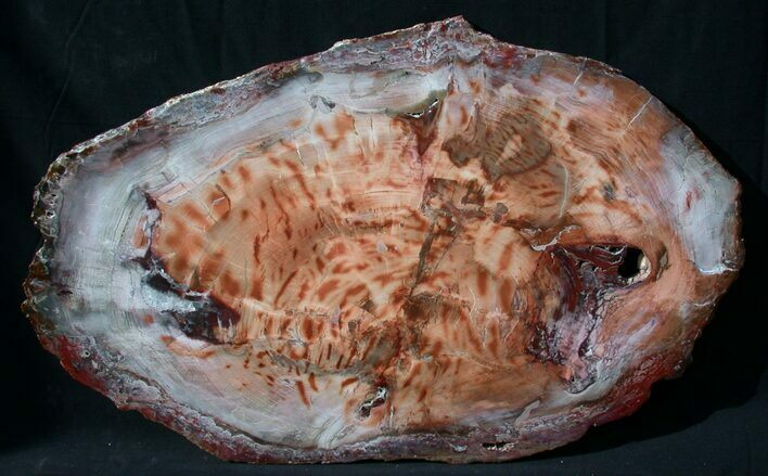 Brilliant Red Petrified Wood Tabletop - 34 x 21""