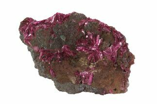 "2.05"" Vibrant, Magenta Erythrite Crystals - Morocco For Sale, #93602"