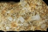 "19"" Cluster Of ""Blue Smoke"" Quartz With Cookeite - Columbia - #94188-3"