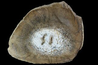 Unidentified - Fossils For Sale - #94917