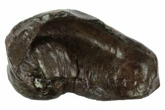 Whale (Unknown Species) - Fossils For Sale - #95742