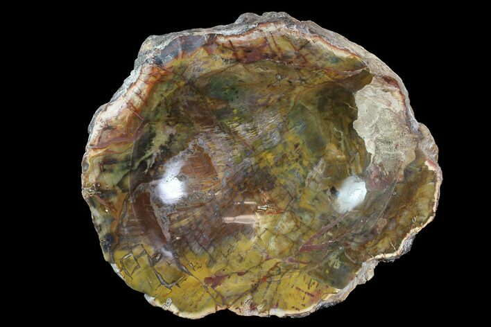 "10.8"" Polished Madagascar Petrified Wood Dish - Madagascar"