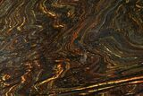 "10.8"" Polished Tiger Iron Stromatolite - (2.7 Billion Years) - #95916-1"