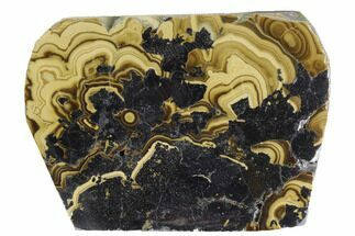 "Buy 2.7"" Polished Schalenblende Slice - Poland - #96772"