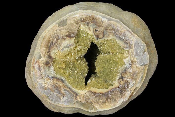 "8.5"" Yellow Crystal Filled Septarian Geode (16 lbs) - Utah"