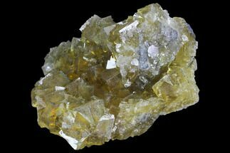 "Buy 2.8"" Yellow, Cubic Fluorite Crystal Cluster - Spain - #98698"