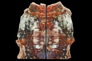 "8.4"" Tall, Arizona Petrified Wood Bookends - Red & Black  For Sale, #99323"