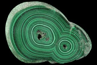 "2.6"" Polished Malachite Slab - Congo For Sale, #99500"
